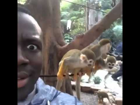 These Monkeys Was Throwing Poop Though Youtube