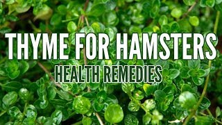 THYME FOR HAMSTERS | Health Remedies