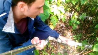 Наука выживания в дикой природе (день 2)