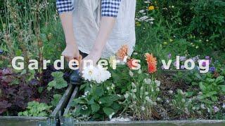 SUB) #46 아름다운 정원을 만들기 위해 내가 매일매일 하는 일  '정원은 가드너의 발걸음으로 가꿔집니다' with 스캘럽