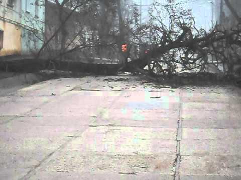 огромное дерево перекрыло дорогу в Керчи
