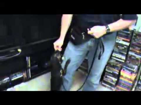 Poulin S Bed Bug Sniffing Dog Ozzie Video Youtube