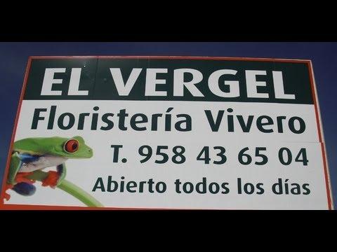 Floristeria vivero en granada el vergel youtube for Viveros en granada
