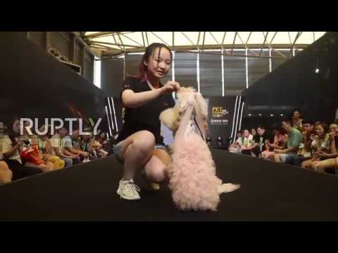 Four-legged friends charm visitors at Shanghai's 21st Pet Fair