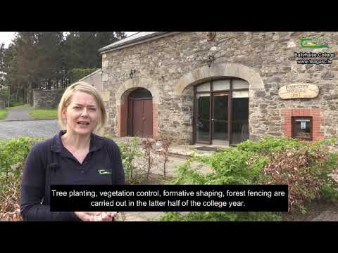 Forestry Enterprise at Ballyhaise College – Marianne Lyons