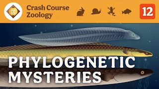 Phylogenetic Mysteries: Crash Course Zoology #12