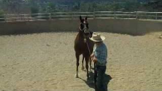 Kicking horse day one,David Lee Archer
