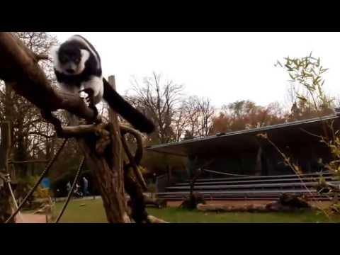 Magdeburg Zoo 02.04.17