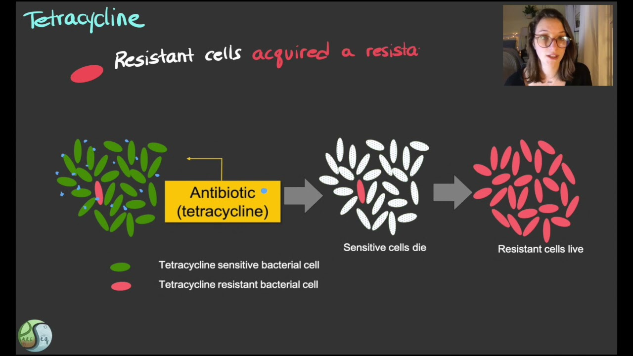 Spotlight on Antimicrobial Resistance Genes of Clinical Significance