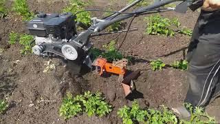 Новый способ окучивания картошки мотоблоком