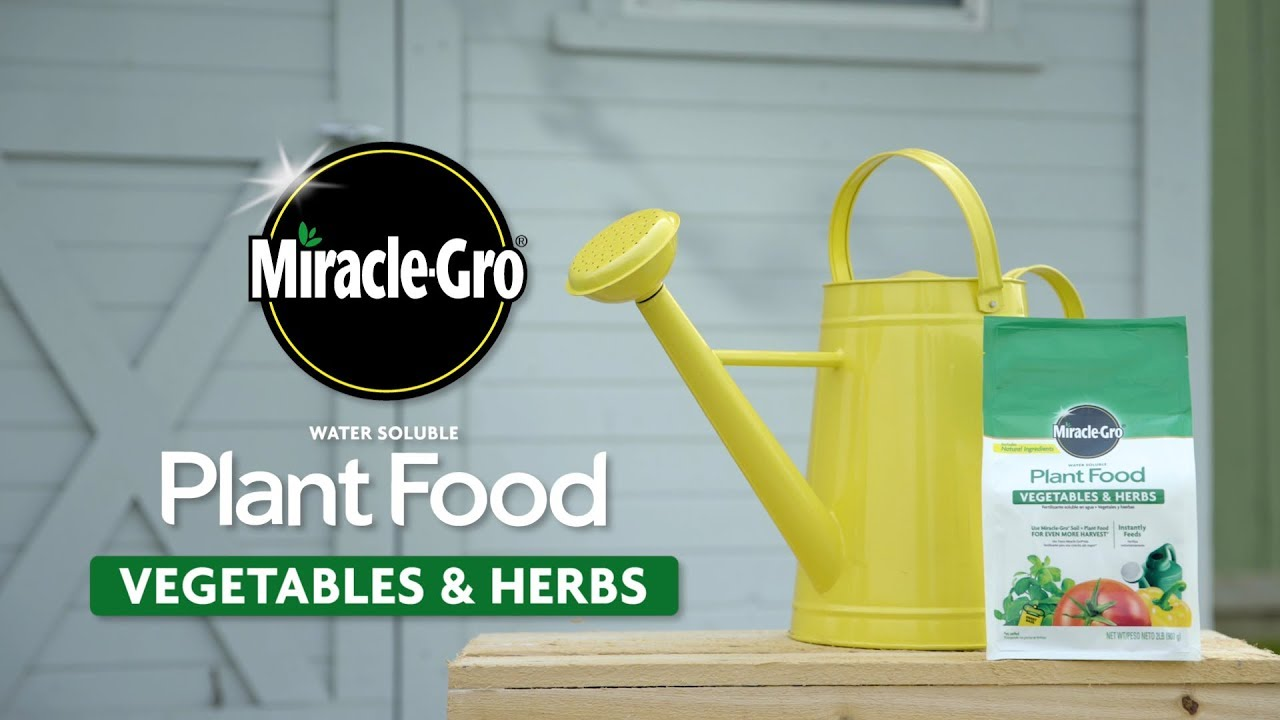 How To Use Miracle Gro Vegetable Herb Plant Food Youtube