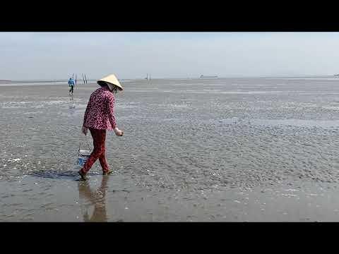 Bắt hải sản trên bãi biển, Ốc Hương, Ốc đá | Sông Nước Cần Giờ - Châu Huỳnh.