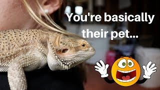 WATCH THIS BEFORE GETTING A BEARDED DRAGON!
