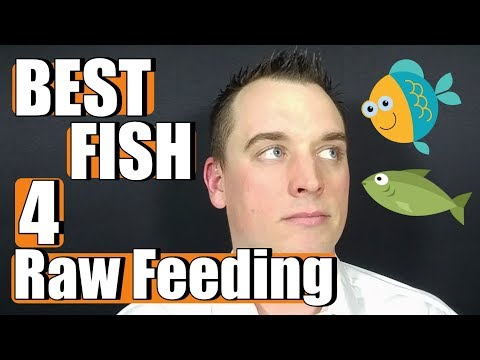 Best Fish For Dogs