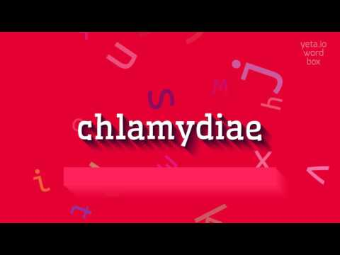"How to say ""chlamydiae""! (High Quality Voices)"