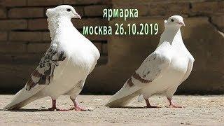Смотреть видео Выставка голубей осень Москва 2019 онлайн