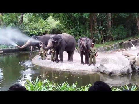 Elephants Rocking | Full Show at Singapore Zoo - 2016