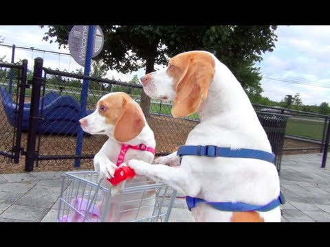 Dog Takes Puppy on Journey in Shopping Cart: Cute Dog Maymo and Puppy Penny