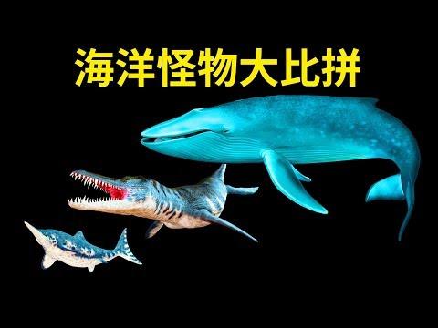 讓你感到渺小的海洋生物大比拼