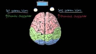 Duygular: Serebral Yarım Küreler ve Prefrontal Korteks (Psikoloji / Çevreyi Algılama)
