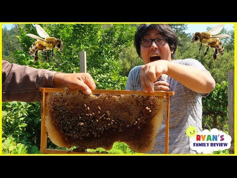 First Time Seeing Bees In Real Life with Ryans Family Review!!!