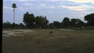 Video Warthog outruns a pride of 15 lions! download MP3, 3GP, MP4, WEBM, AVI, FLV Juni 2018