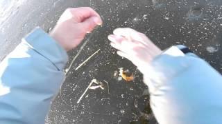 Ловля окуня на балду (яйца)
