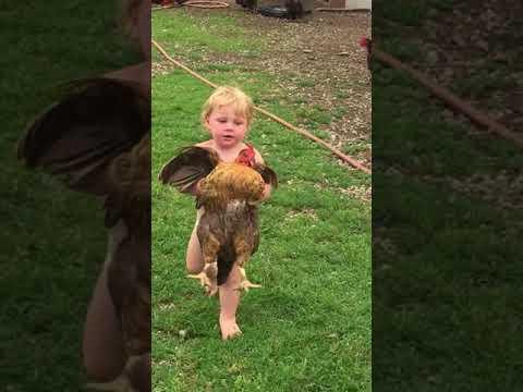 "Farm Life ""1 yr old Chicken Wrangler!"""
