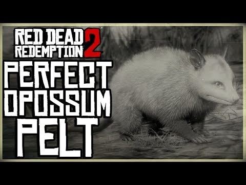 how-to-get-a-perfect-opossum-pelt---red-dead-redemption-2-pristine-opossum-hunt