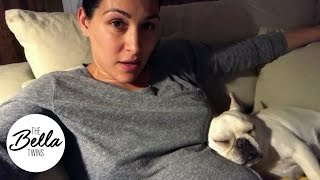 brie bella s belly is winston s pillow adorable snoring