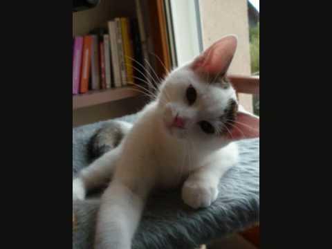 Les Chats Et Chatons à Adopter De L'Ecole Du Chat De Quiberon