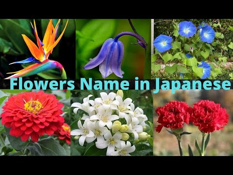 Name of Flowers  | Flowers name in English - Hindi and Japanese  | फूलों के नाम  |  Flower name