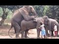 عالم الحيوان || تزاوج الفيلة فى حديقة الحيوا�