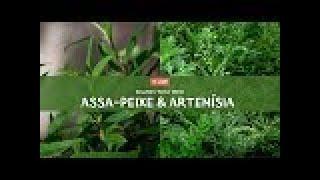 Artemísia e Assa-Peixe: Conversando sobre plantas medicinais com Marcos Guião