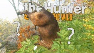 ZBIJAM FORTUNĘ NA ŻUBRACH! | theHunter: Call of the Wild #9 [PL]