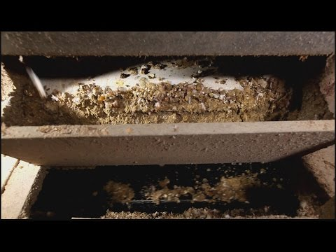 Cleaning Chicken House By Automatic Chicken Manure Removal System