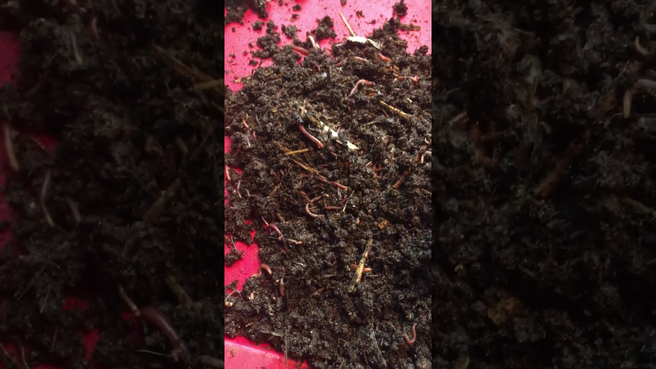 Can You Put Worms In A Compost Tumbler Wormsfor