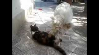 Videos de animales - Un perro y una gata dan rienda suelta a su pasion