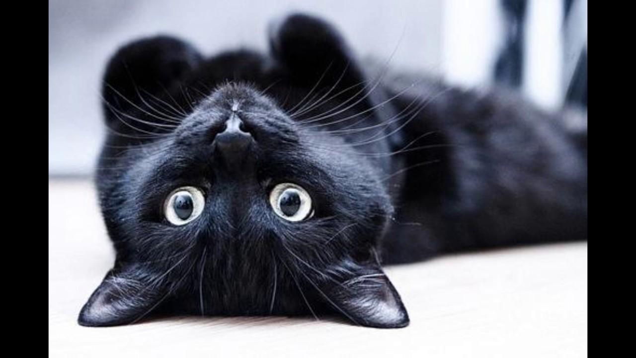 Картинки, картинки с черными кошками на аву