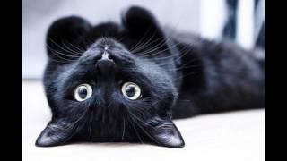 Чёрный кот ( картинки под музыку )