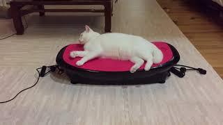 ダイエットマシンに横たう白猫、揺れて揺らされ液状化