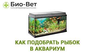 Как подобрать рыбок в аквариум. Совместимость рыб.