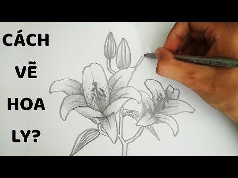 Vẽ Hoa Ly bằng bút chì – How to draw Lily Flower