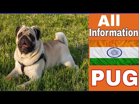 Pug dog facts in hindi.