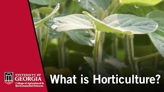 Video What is Horticulture? download MP3, 3GP, MP4, WEBM, AVI, FLV Juli 2018