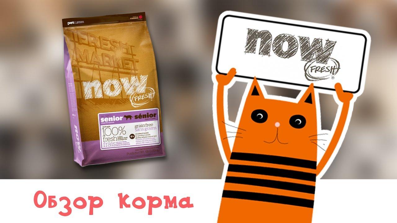Обзор корма NOW Fresh Puppy Recipe Grain Free - YouTube