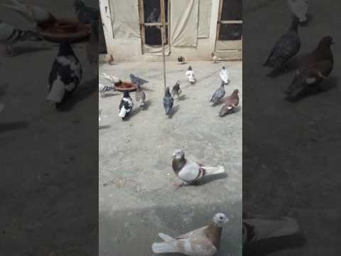 Pakistan quota Haji Farooq