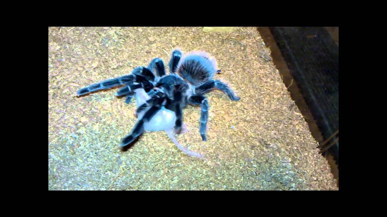 Spider (2002) - IMDb