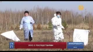 Порядка 200 казахстанцев обратились к врачам после укусов клещей
