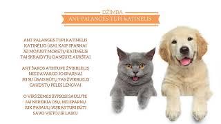 DŽIMBA - Ant palangės tupi katinėlis